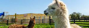 Kia Ora Mini Farm near Gleeson's Holiday Park, Clogga.